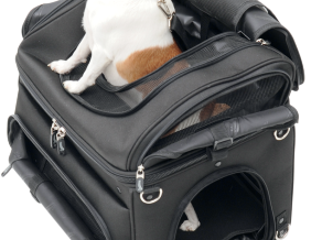 pet_voyager_victory_motorcycle_rear_pic_dog